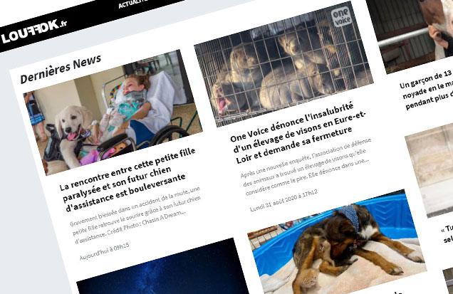Création blog google adsense louffok.fr